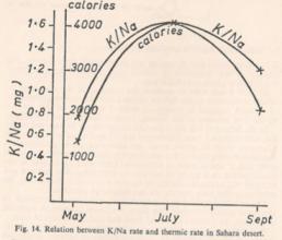 Balance térmico y concentración del sodio y potasio según resultados obtenidos en el Sahara por Kervran.