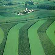 La agricultura intensiva y los monocultivos, eliminan los oligoelementos como el silicio.