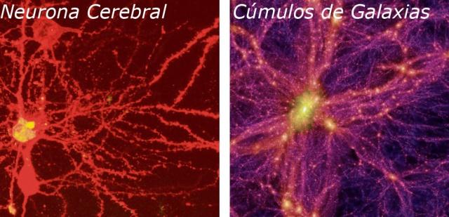 Una neurona y una galaxia. ¿ Vivimos en un universo fractal de gran orden y negéntropía?