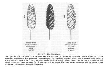 Estudio sobre el efecto implosivo de una piña, realizado por Viktor Schauberger.