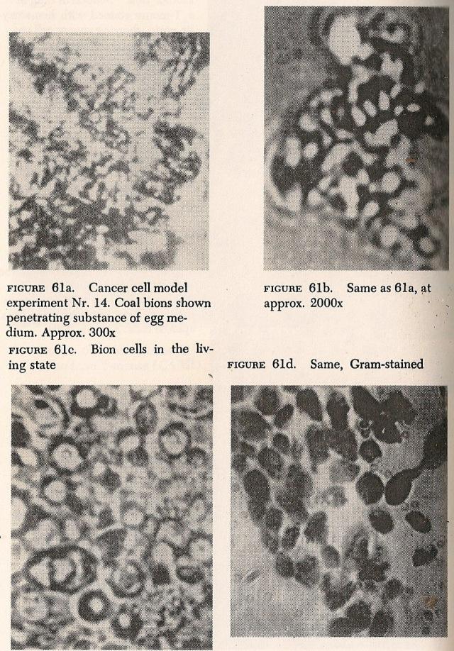 Fig 61a. Biones de Carbon penetran en clara de huevo. Diferentes formas biónicas. Ref; La Biopatía del Cáncer.