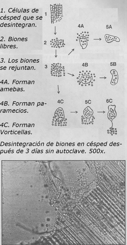 Foto. Formación de biones a partir de césped y posibles estructuras subsiguientes. Experimento de biogénesis primaria. James De Meo. Ref: The Heretic's Notebook. Pg 101.