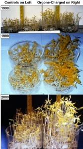 Resultados experimentales en los tres años de experimentos en soja verde.