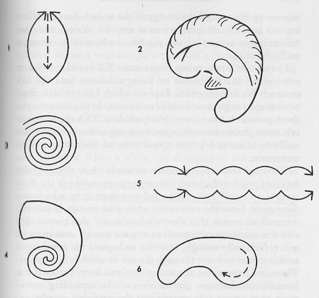 Formas mórficas de oreja humana, caparazones de ostras, serpientes, intestinos, cerebros...